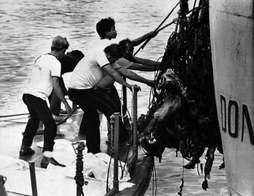 Mga sunog na bangkay na nakuha mula sa MV Doña Paz.